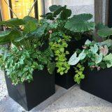 Square Box Contemporary Black Light Concrete Planter H50 L50 W50 cm