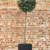 Square Box Contemporary Faux Lead Light Concrete Planter H32 L35.5 W35.5 cm